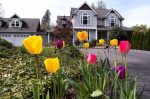 Spring Homebuying Trends